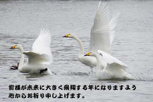 S_h261205_42